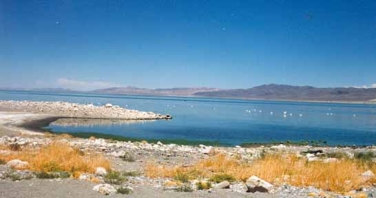 Walker lake, NV